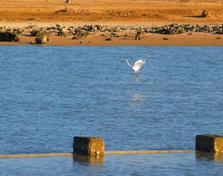 White bird. Red Sea. Egypt. Stock Photo - 7302072
