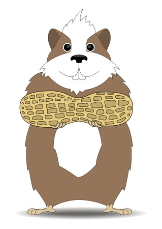 cartoon illustration of a hamster keeps feet in peanuts
