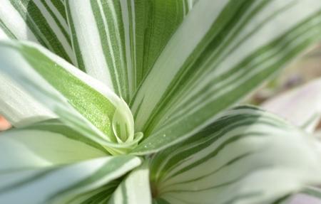 green plant close up