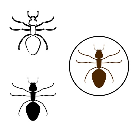 anthill: illustration of an ant in different styles