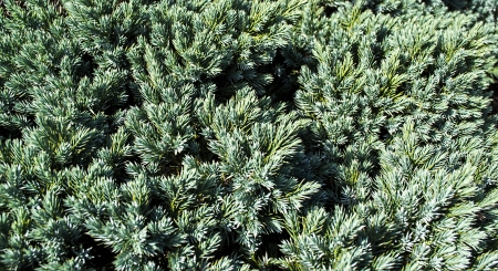 background is made up of pine needles Stock Photo - 22719246