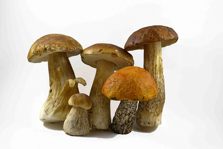 family photo porcini mushrooms on a white background
