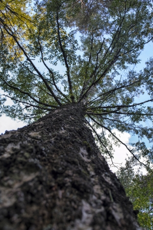 type of tree from the bottom up in the woods Stock Photo - 22718019