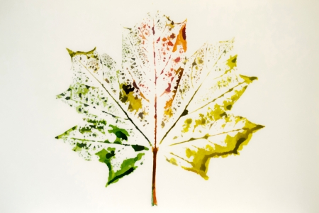 maple leaf painted watercolors of different colors Stock Photo