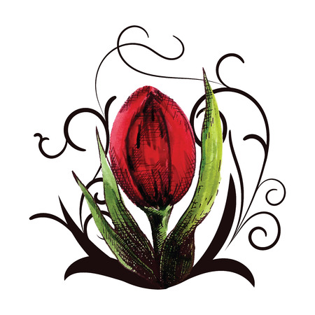 red tulip: beautiful red tulip with curls for decoration Illustration