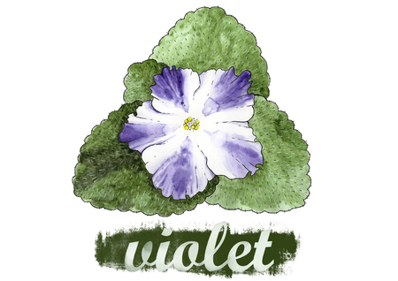 Room flower violet painted in watercolor Stock Photo
