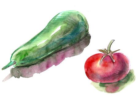 Watercolor zucchini and tomato. Useful vegetarian food.