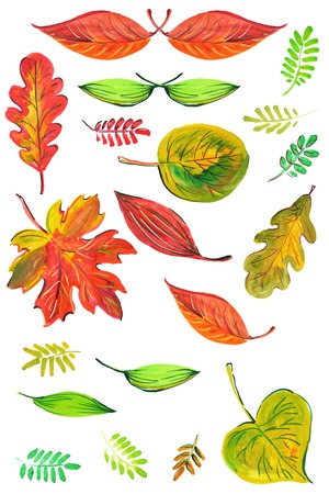 Set of watercolor leaves of various kinds.