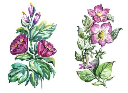 Watercolor flowers in different styles.Flowers for design work.