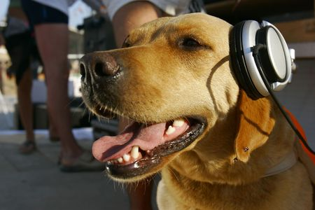 dog in headphones photo