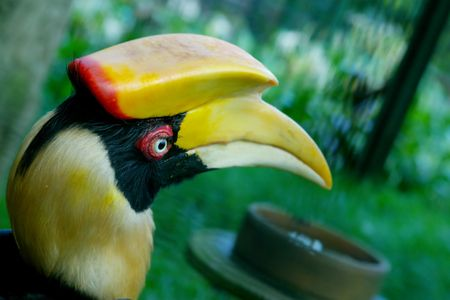 hornbill: head of hornbill Stock Photo