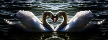 swan heart Stock Photo