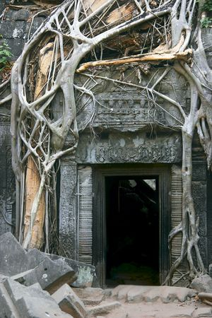th� ¨: Tha Prohm, Angkor, in Cambogia