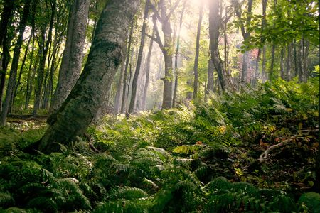 fairy forest: morning in forest Stock Photo