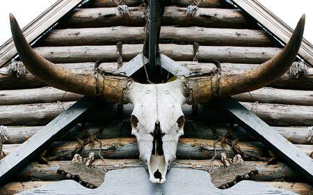 buffalo skull Stock Photo - 3776025