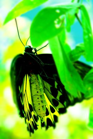 yellow butterfly on green leaf photo