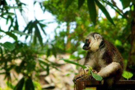 hominid: scimmie in giardino zoologico