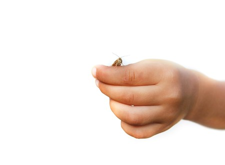 childs hand with grasshopper over white photo