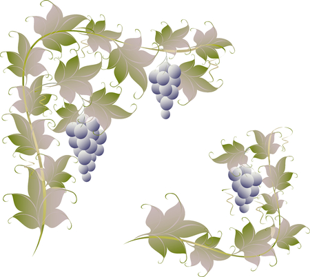 grape fruit: Pattern of vine grapes for page decoration.