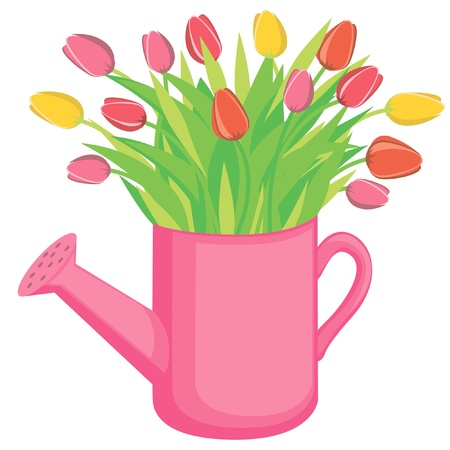 watering plants: Bouquest of tulips flowers in the watering can