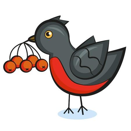 bullfinch(13).jpg Illustration