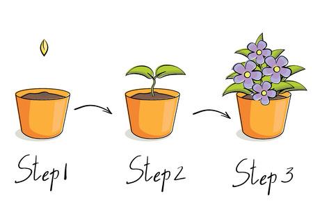 Vector illustration of steps growing flower in pot Çizim