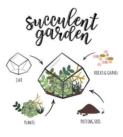 Vector info-graphic of a floral poster design with succulent flower plant and 'Succulent garden' lettering.