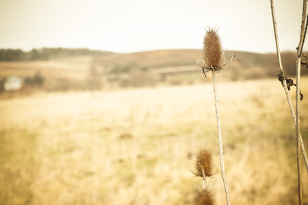 Dry grass & plant on yellow winter field