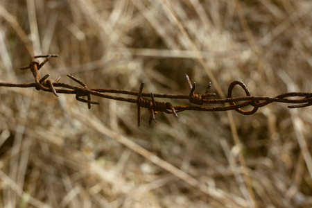 Old rusty barbed wire in field closeup Stock Photo