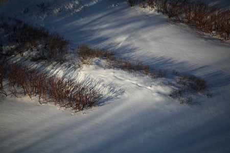 The bushes are covered with pure snow lit by the morning sun. photo