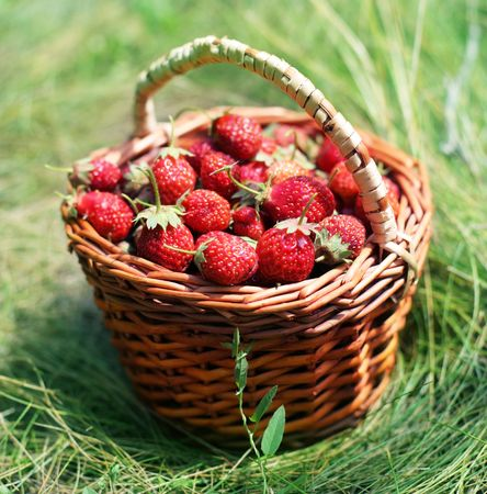 Strawberry in a basket on a grass. photo