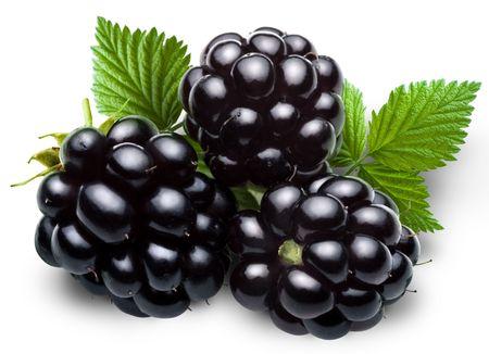 woodsy: blackberry
