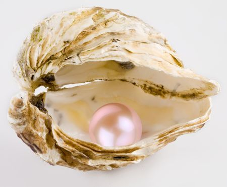oyster shell: Pink pearl is in a shell.