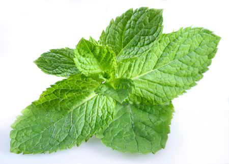 mint; objects on white background photo
