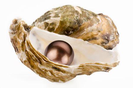 ostra: Negro perla se encuentra en un dep�sito. Foto de archivo