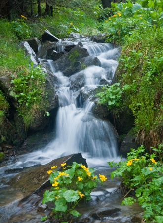 waterfall in forest: waterfall