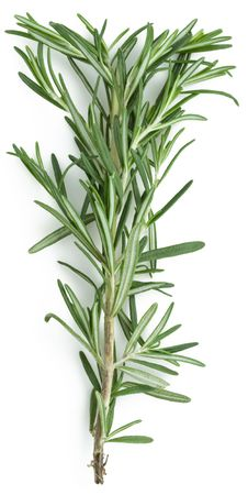 rosemary Stock Photo - 5329088