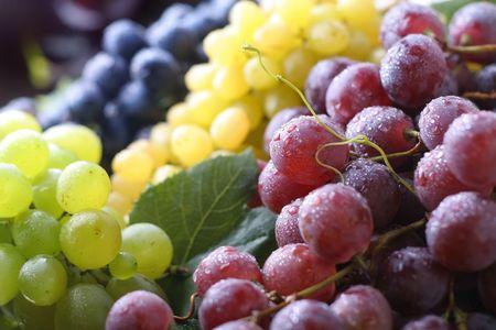 sauternes: Vine