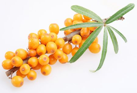 seabuckthorn: Sea buckthorn on a white background