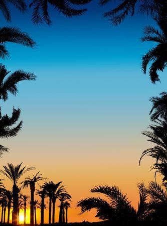 nightfall: The silhouettes of palms on beautiful sunset background