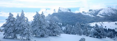 Winter landscape of pines covered with snow in the Crimea mountains photo