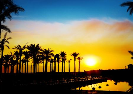 The silhouettes of palms on beautiful sunset background photo
