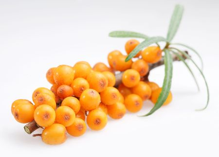 Branch of sea buckthorn on a white background photo