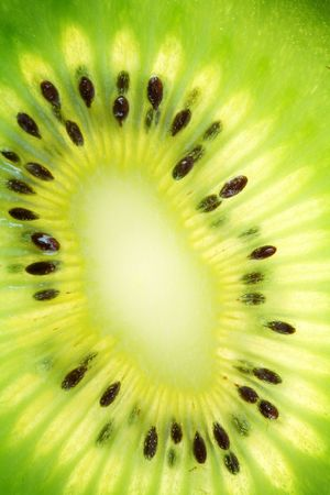 Back projected (lighted) cross sections of kiwi photo