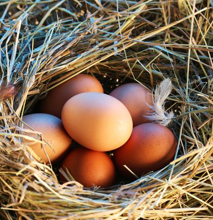 organic background: Chicken eggs in the straw in the morning light.