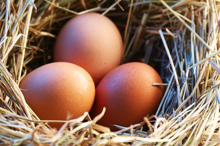 Chicken eggs in the straw in the morning light. photo