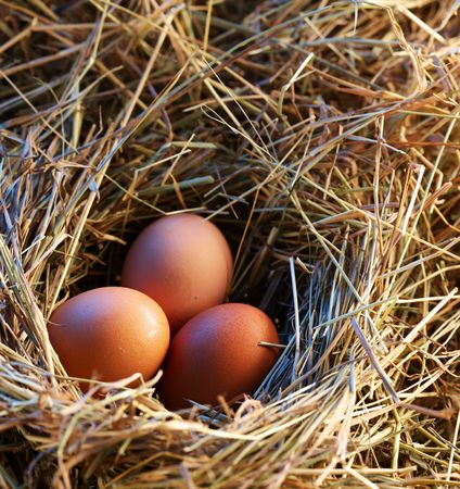 Chicken eggs in the straw in the morning light. Stock Photo - 6335462