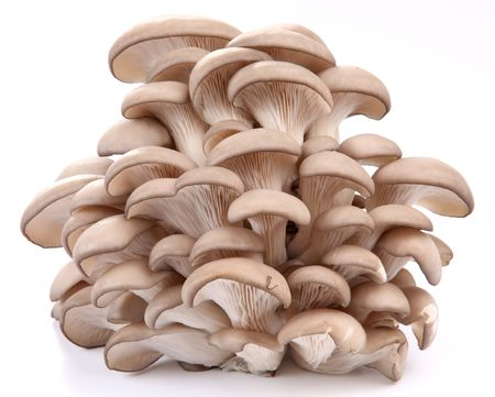 edible mushroom: Oyster mushrooms on a white background Stock Photo