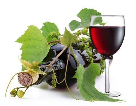 wine growing: Bottle of wine in the vine on a white background