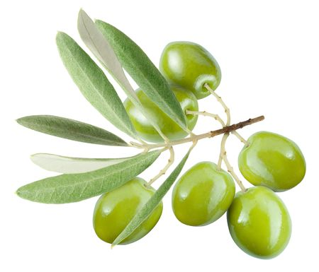 olive leaf: Rama con aceitunas verdes aislados en blanco